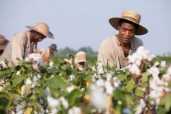 『【週末シネマ】黒人監督が見つめた奴隷制度──現代にも通じる不条理描くオスカー受賞作』