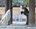 『小栗旬と柴咲コウが全国数都市で『信長協奏曲』の大ヒット御礼舞台挨拶』