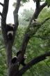 『福山雅治、樹木などにそっくりの昆虫見て「僕も擬態したい」と感心!』