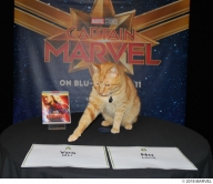 『『キャプテン・マーベル』に登場!あの天才ネコのまさかのインタビュー映像到着!』