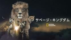 『野生の王国の残酷で無慈悲な現実に焦点! リアルな弱肉強食を映し出す』