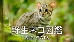 『ひと味違うネコの姿は必見! ネコ好きならずともオススメの秀作ネコ・ドキュメンタリー』